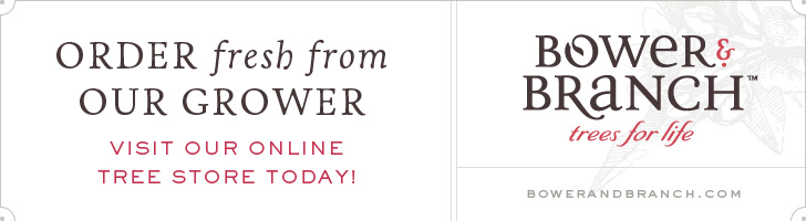 Shop Our Online Bower & Branch Tree Store